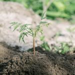 Planting 1,000 Trees for the Future